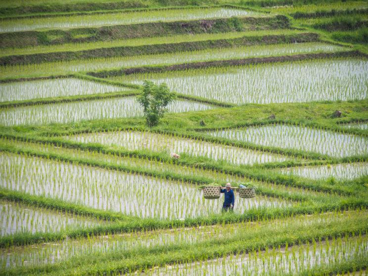 Reis Getreide Regiothek