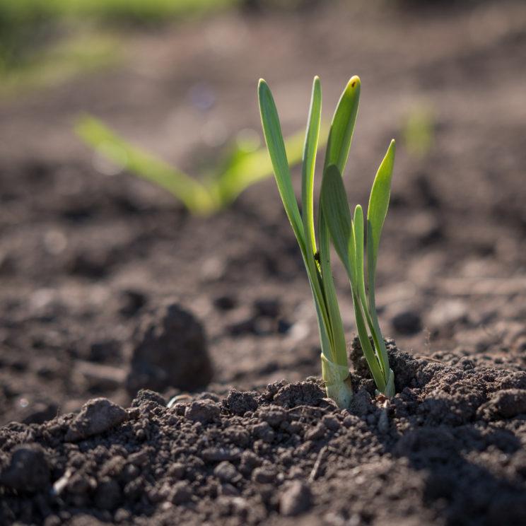 Pflanzen Boden Regiothek