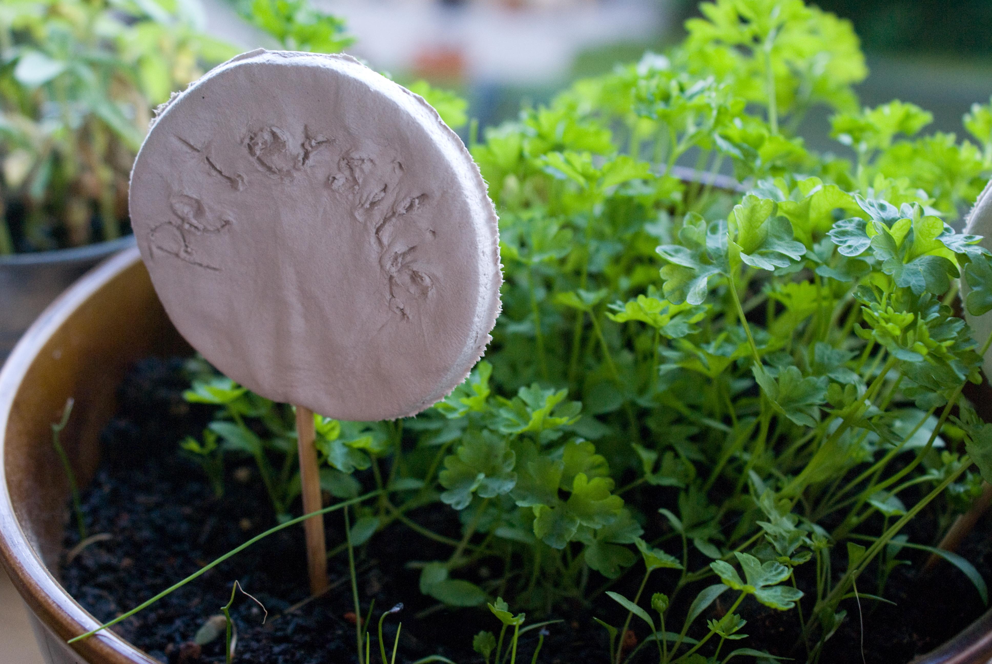 Vom Kräutergarten in die Kräuterküche