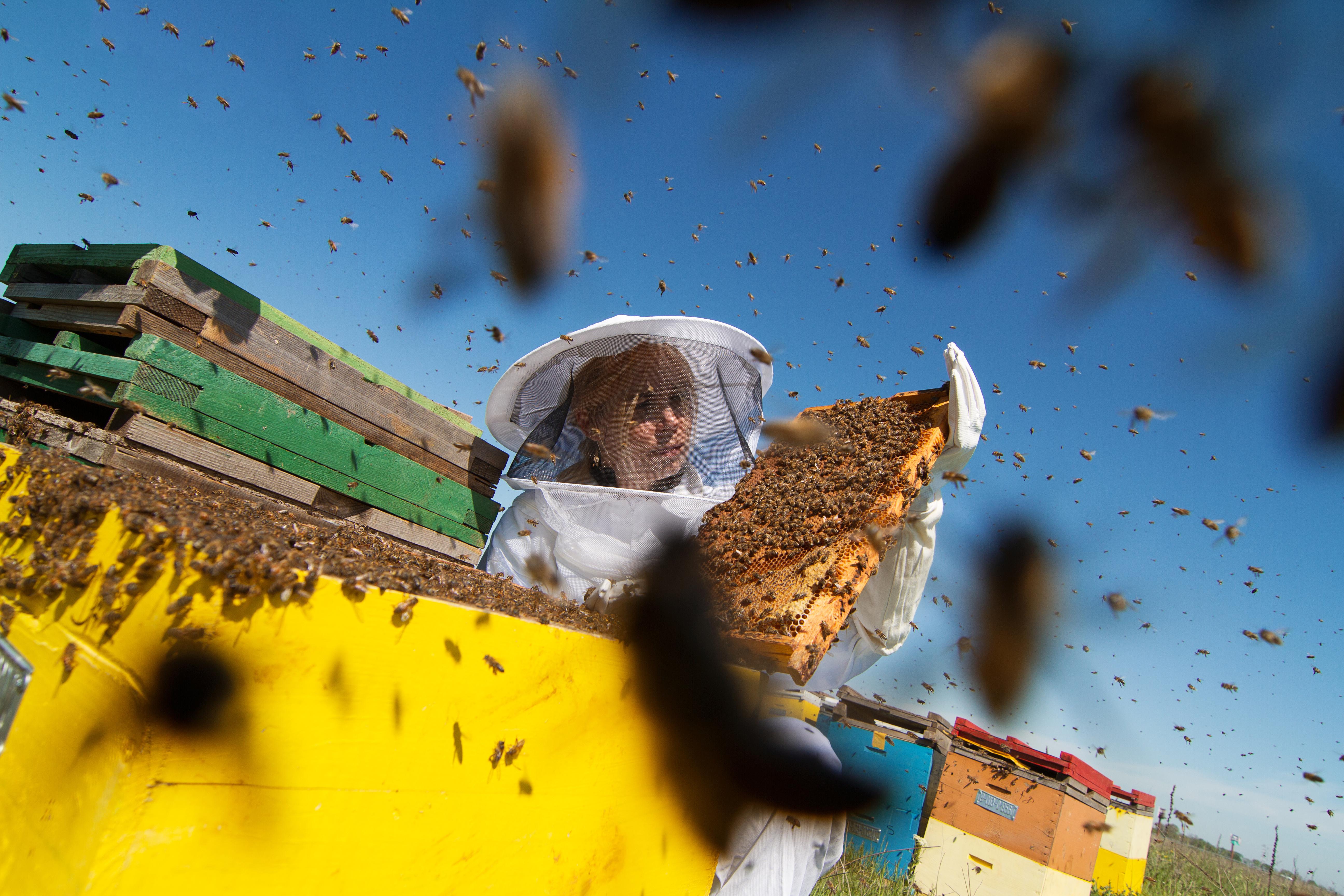 Gestreckt, billig, industriell: Chinesischer Honig vs. heimische Imker