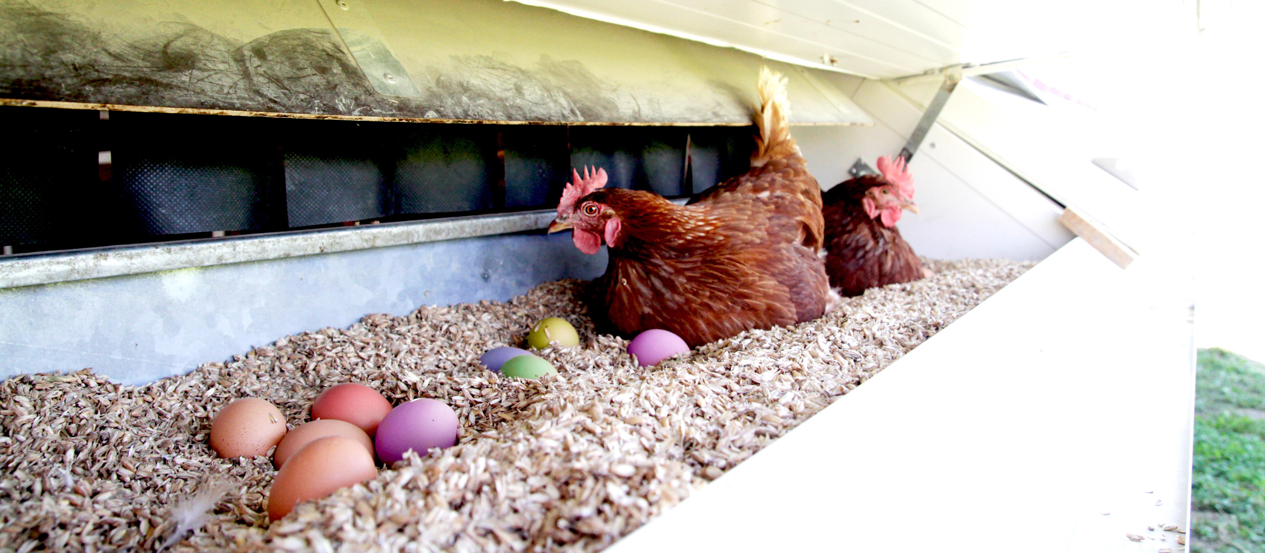 Wie der Hase an Ostern wirklich läuft