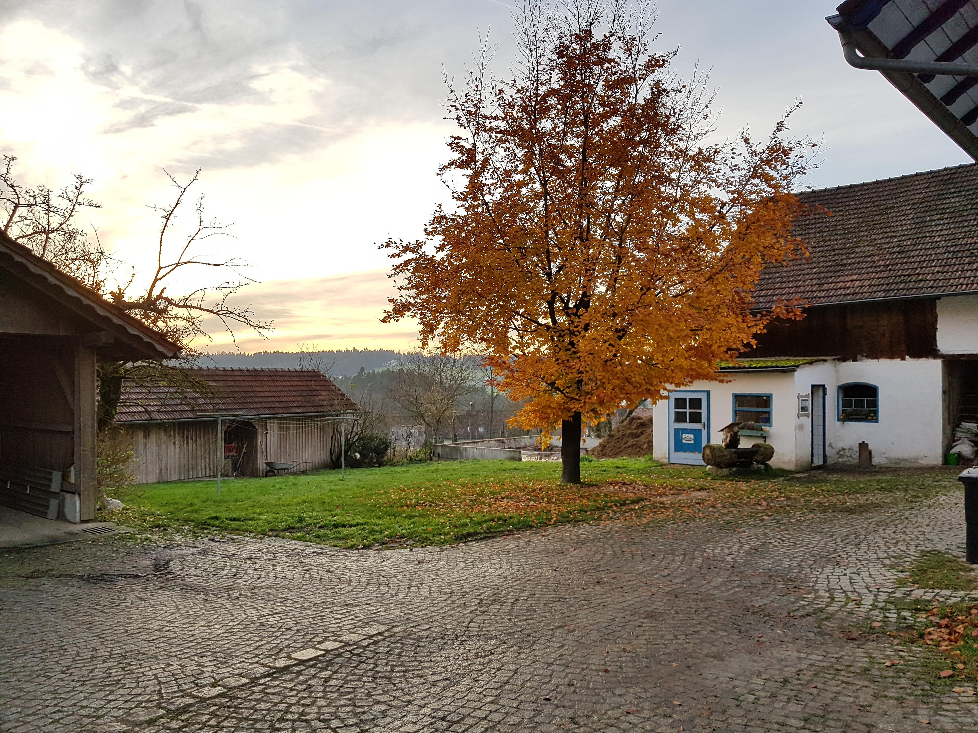 Wenn die Blätter sich färben und die Bäume kahler werden, dann wird es Herbst.