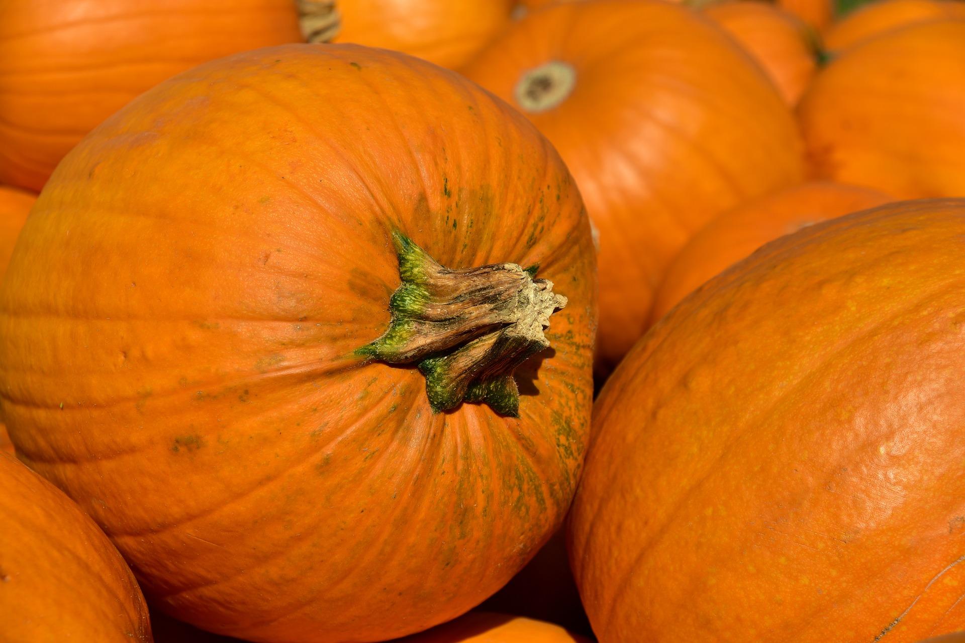 Nahaufnahme eines knallig-orangenen Kürbis, der in einem Haufen andere Kürbisse liegt.