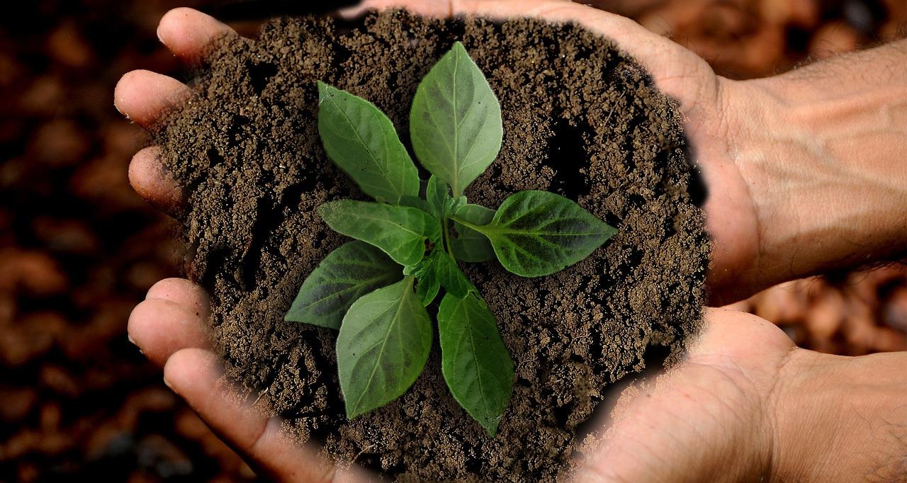 Sustainable Development Goals | SDGs