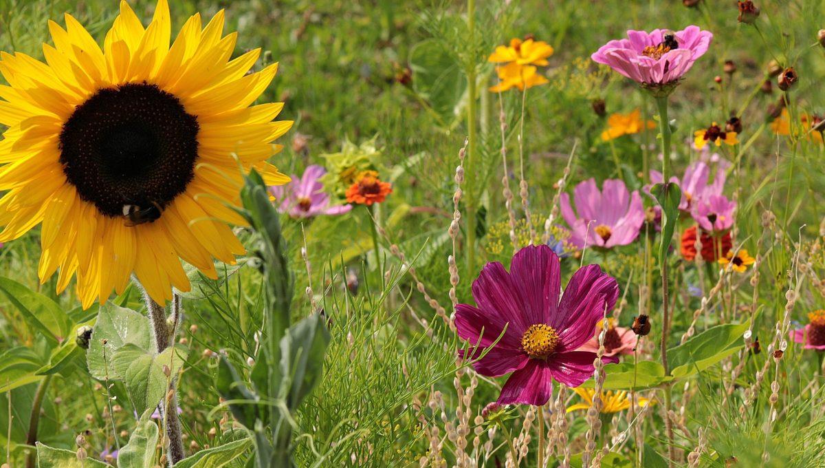 wild-flowers-3592932_1920