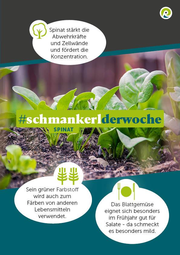 Unsere #SchmankerlderWoche Infografik zum Spinat.
