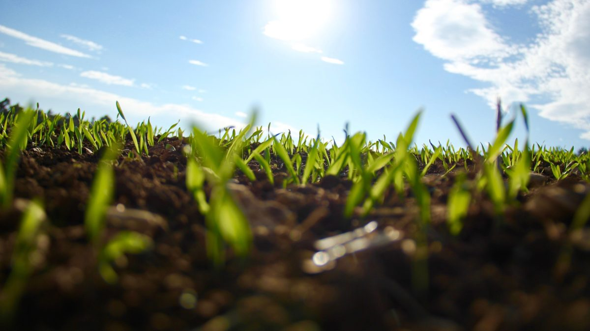 Aus der braunen Erde ragen junge Pflanzentriebe. Im Hintergrund ist ein blauer Himmel und die Sonne zu seheb.
