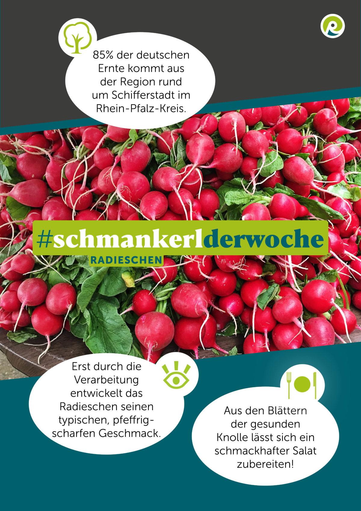 Regiothek-Infografik zum Schmankerl der Woche: Radieschen