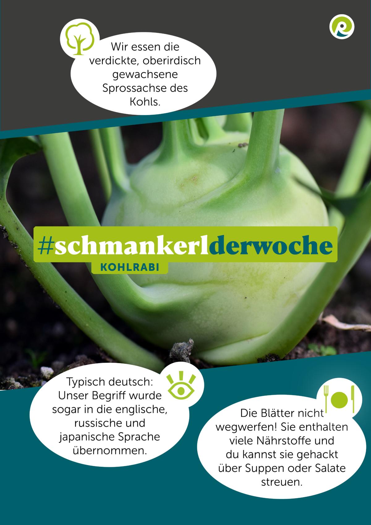 Die Regiothek-Infographik zum Schmankerl der Woche: Kohlrabi