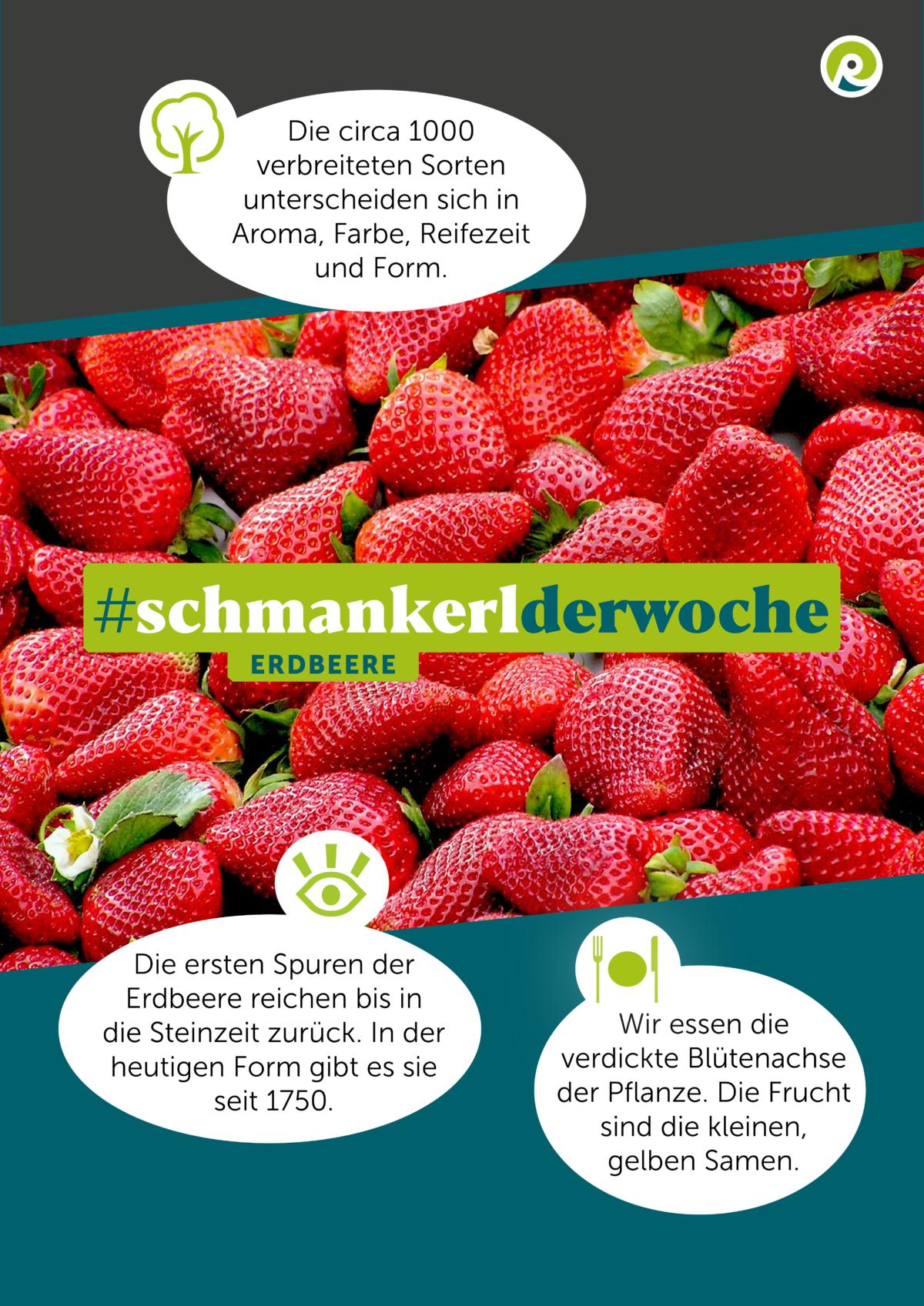 Die Regiothek-Infographik zum Schmankerl der Woche: Erdbeeren