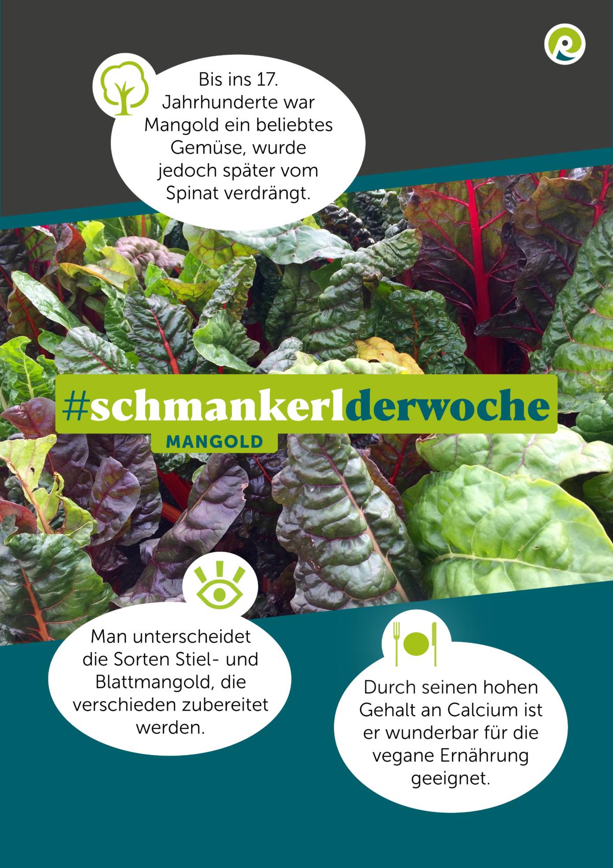 Die Regiothek-Infographik zum Schmankerl der Woche: Mangold