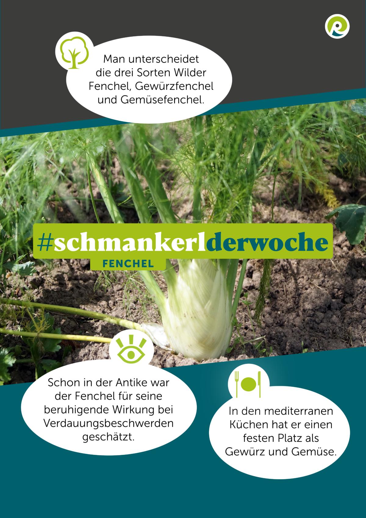 Die Regiothek-Infographik zum Schmankerl der Woche: Fenchel